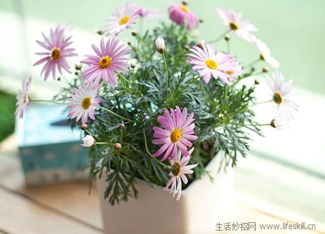 如何用花卉装饰客厅?