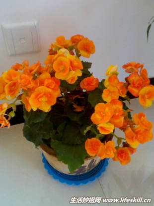 你知道花要多久才浇一次水吗? - 瀛子 - 瀛の小笺