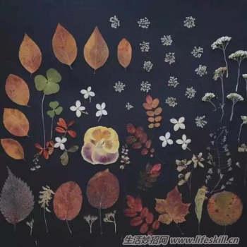 如何自制干花束图片