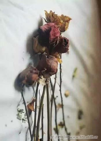 如何自制干花花束图片