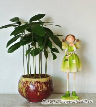 一盆可爱的仙人掌就诞生啦