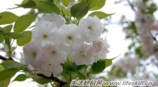 家中常见花卉的浇水方法,别再浇死了!