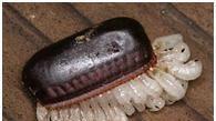 完全消滅蟑螂的七種方法