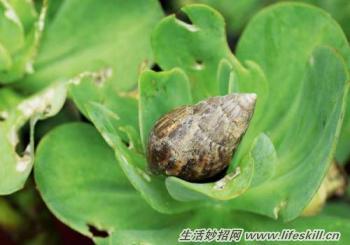多肉植物虫害图片欣赏图片