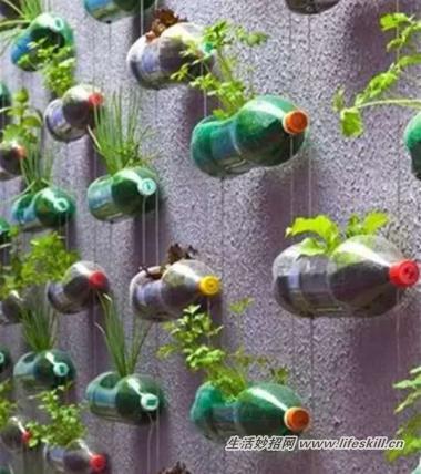 瓶子改造花盆步骤