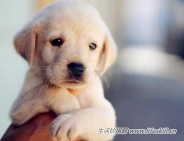 对于爱养狗狗的朋友,这9个问题你需要了解